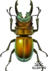 1222025676_jewel-beetle.jpg
