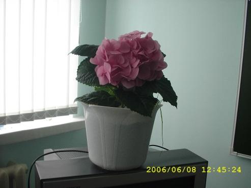 8 июня 2006 г